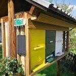 Пчелиные весы и важность ульев для взвешивания.
